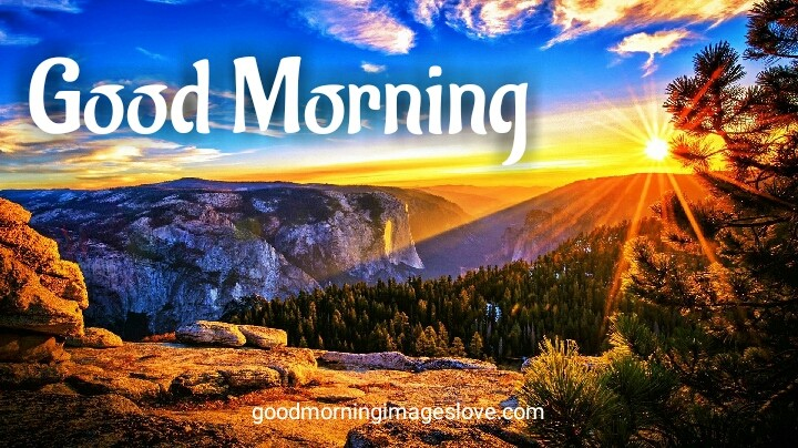 morning natural sceen