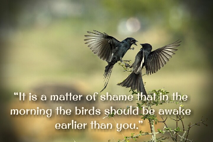 bird fight motivational quotes