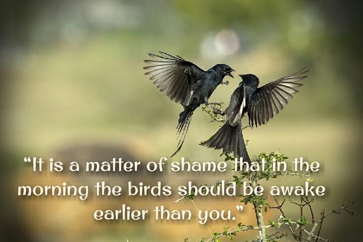 bird fight motivational quotes