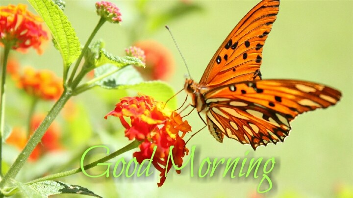 a butterfly with red flower morning images