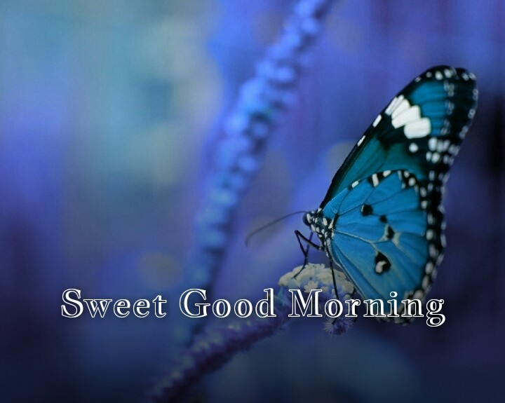 blue butterfly with sweet good morning
