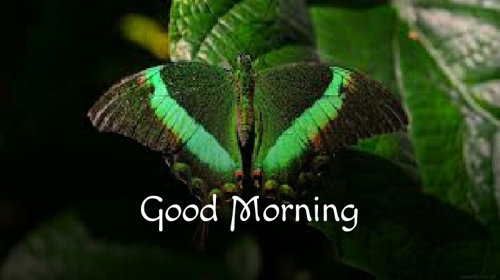 butterfly morning pictures