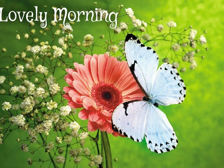 white butterfly on Lilly flower with lovely morning