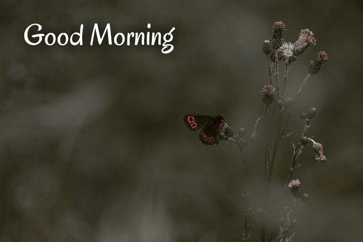 a red black butterfly with a little tree written on good morning