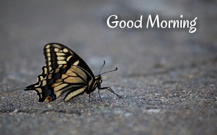 a butterfly sat on road written with good morning