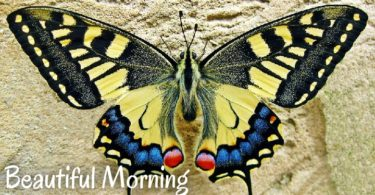 HD Good Morning Images 14