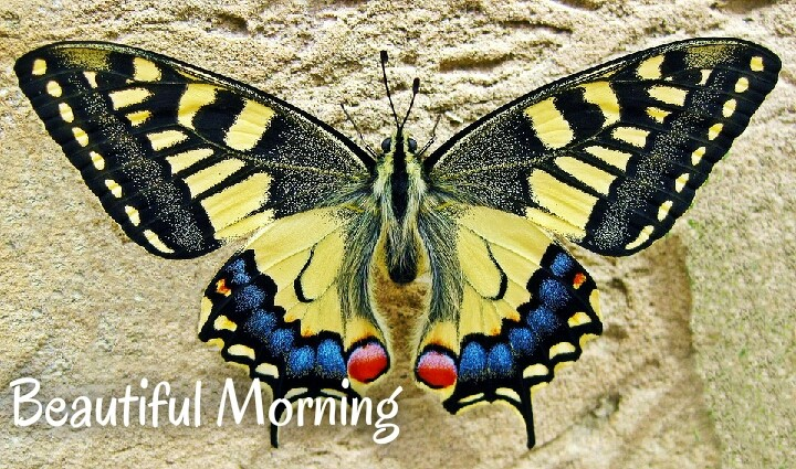 beautiful morning yellow butterfly on sand