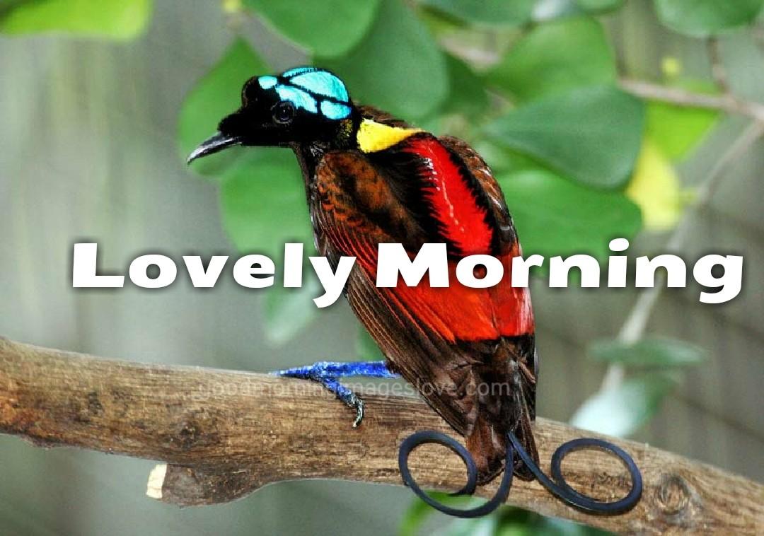 loving birds on the tree in morning