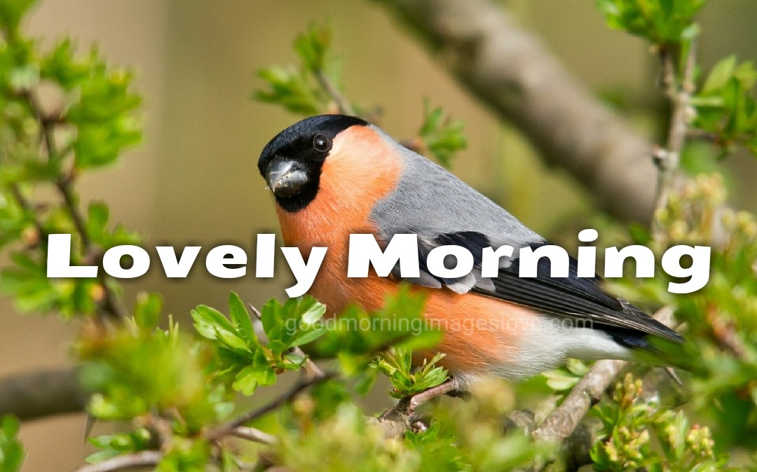 beautiful birds set on the tree morning wishes