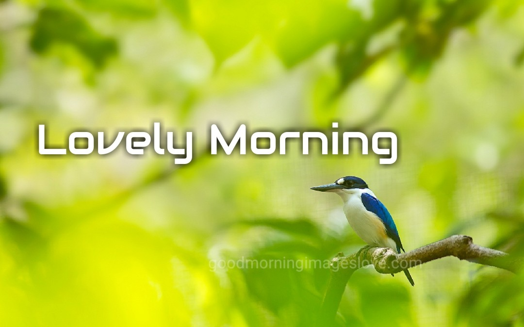 lovely morning with little birds quotes