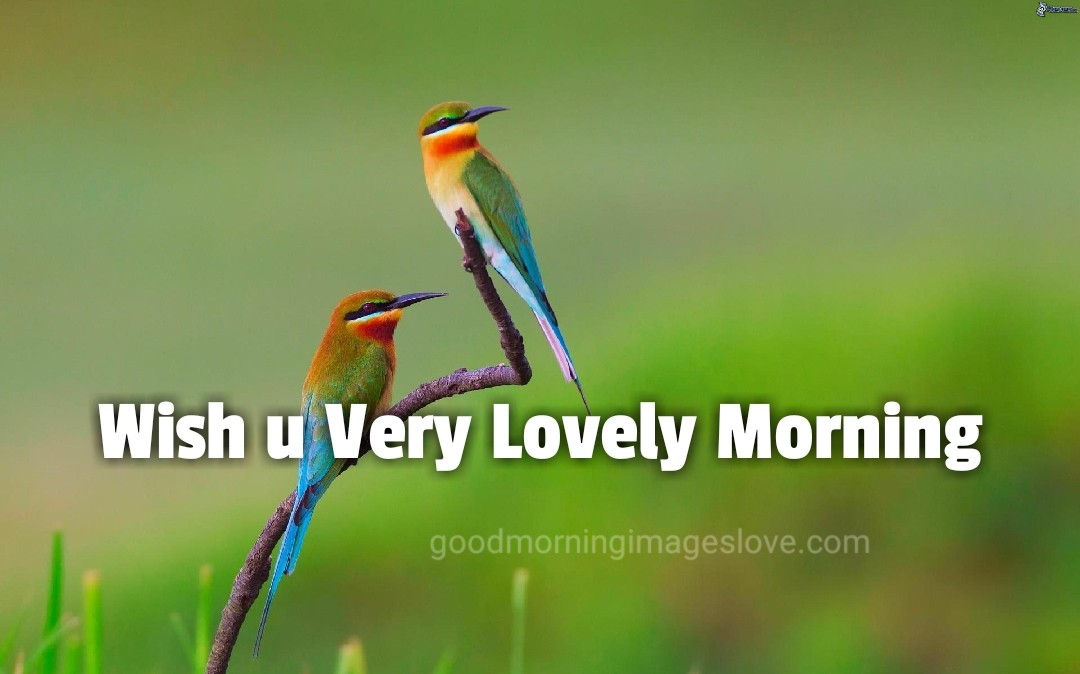 two little birds with greenery good morning