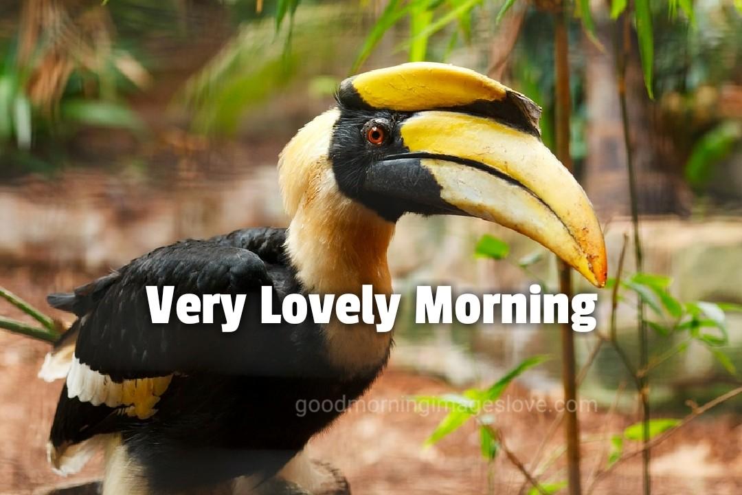 lovely birds staring wishing morning