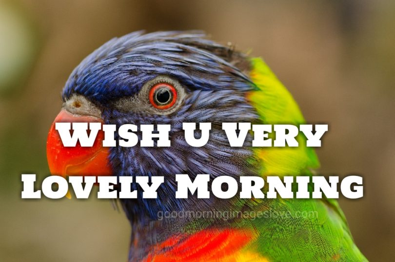 colorful parrot wishes morning