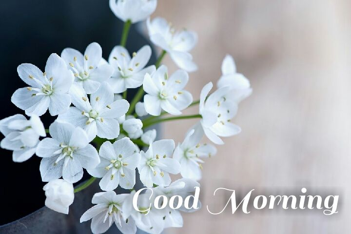 bundle of white flowers morning wishes images
