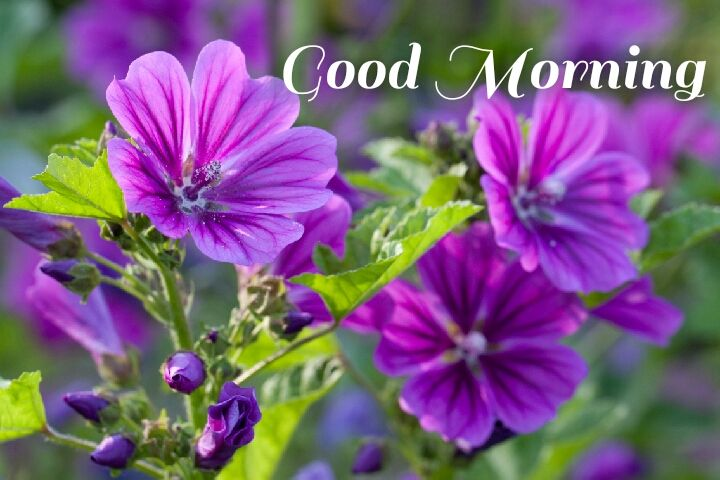 dark purple flowers with leave morning wishes images