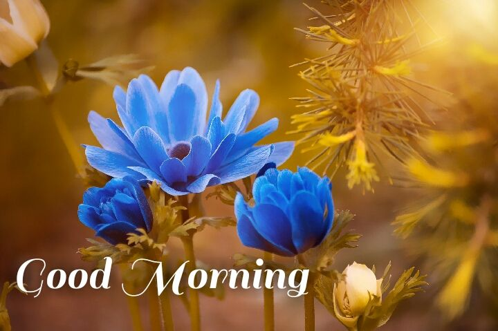 blue flowers with sun shine morning images