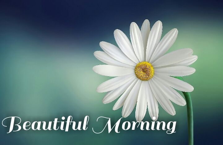 hd white flower beautiful morning images