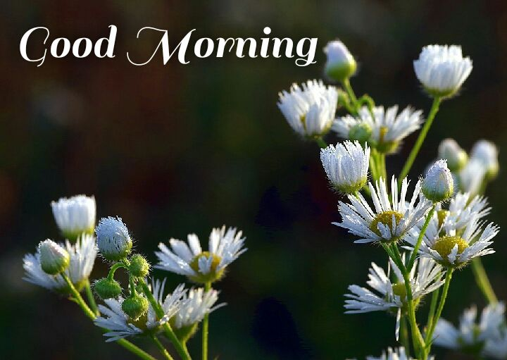 white flowers good morning wishes in greenery