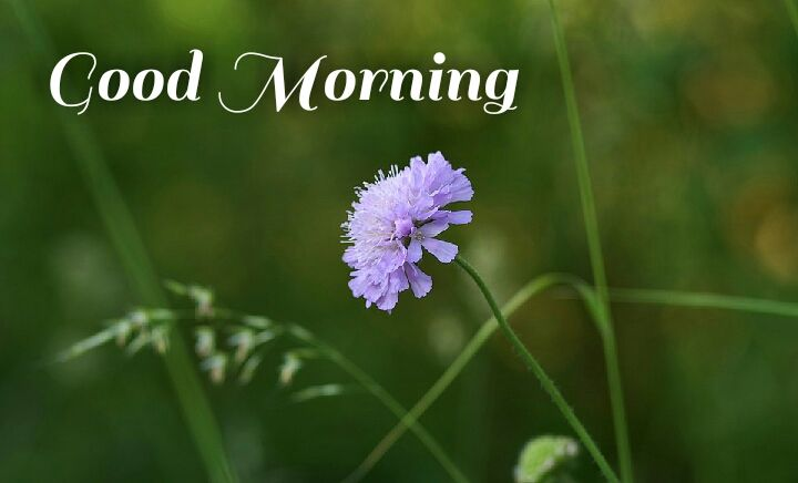 Purple color beautiful flowers morning wishes