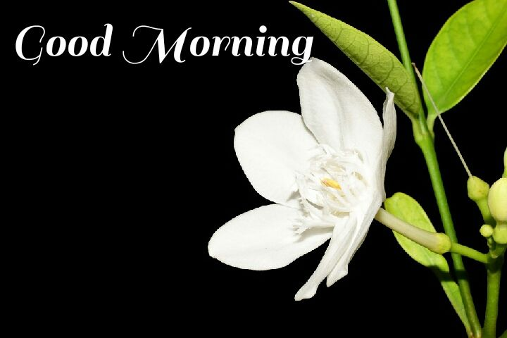 white flowers with leave morning wishes images