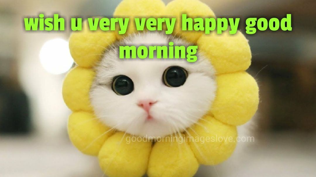 beautiful cat decorated with morning messages