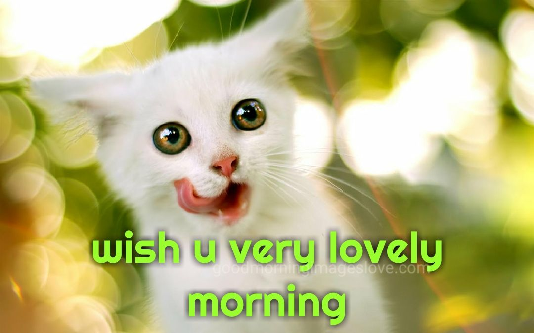 white kitty cat morning messages