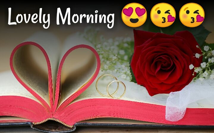 red rose cute morning images