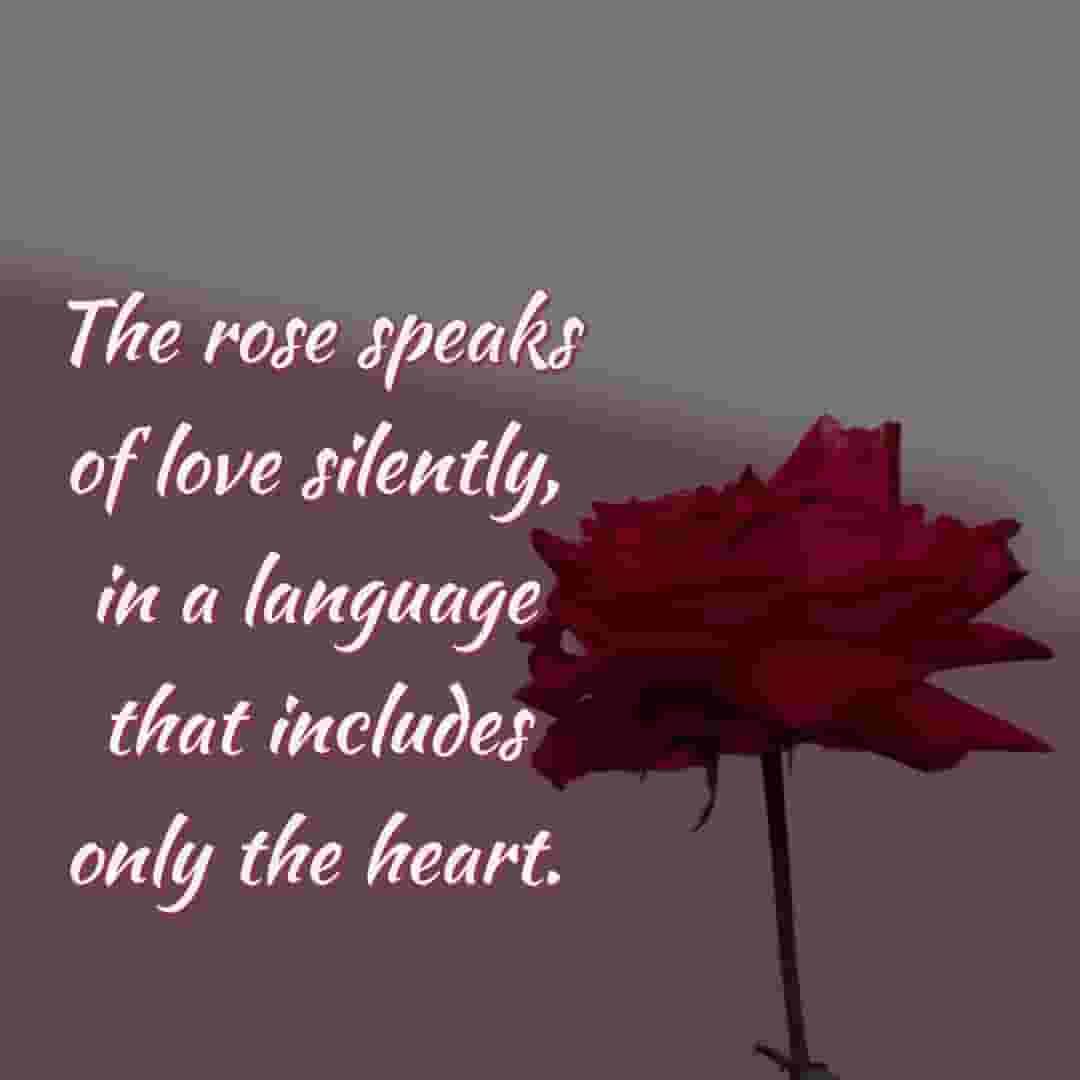 rose speak to love u