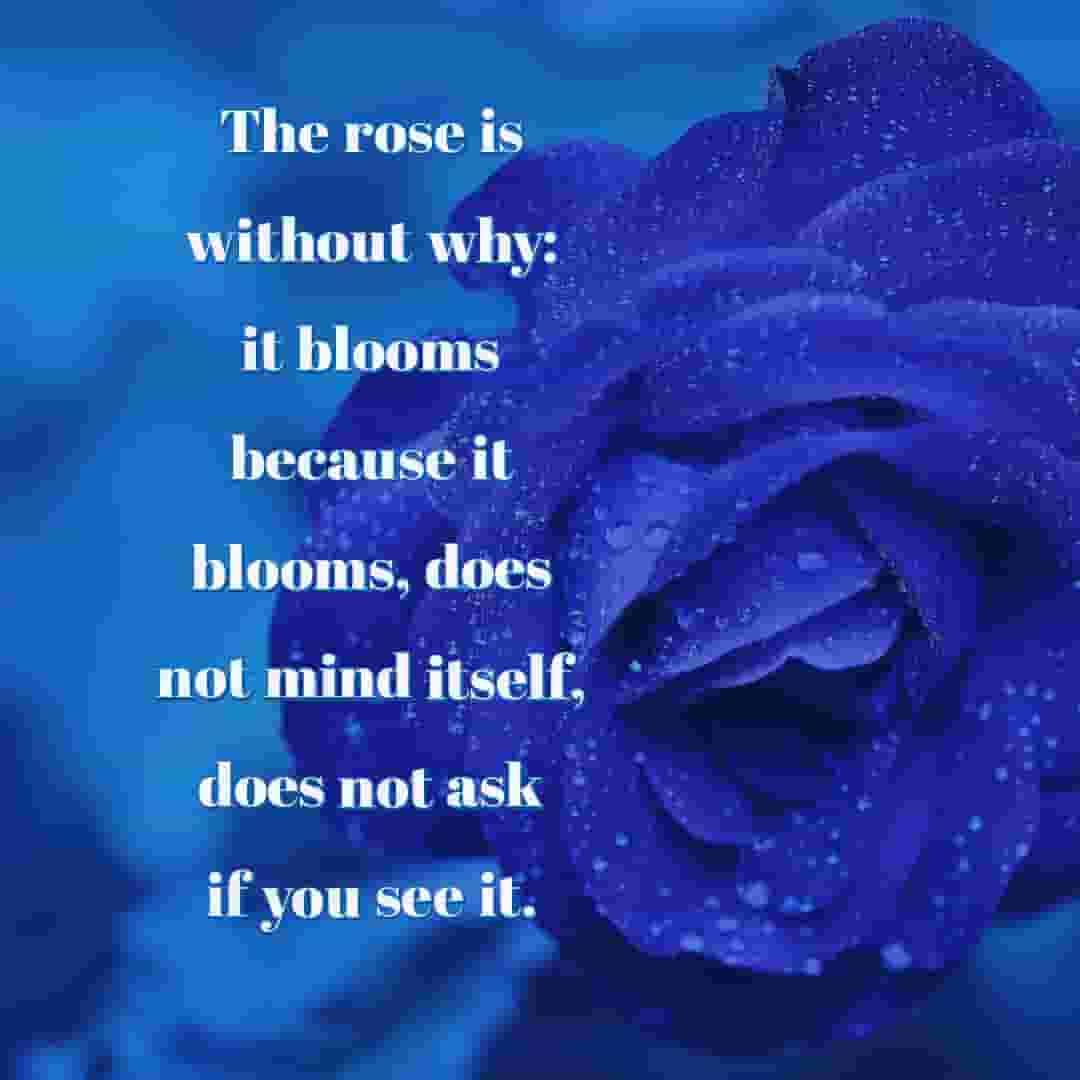love u my sweetheart as like rose